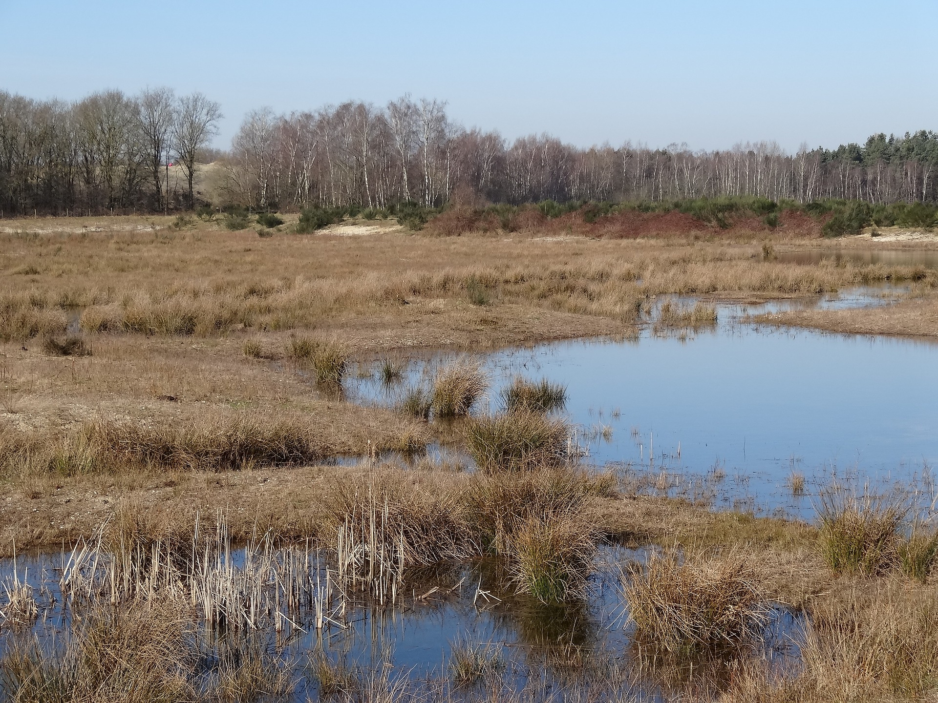 Vakantiepark Landal Het Vennenbos: genieten in Brabant